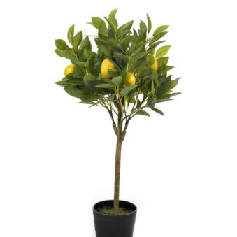 Citrusboom 70cm
