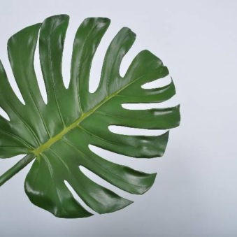 Groot blad philodendron